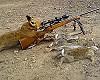В Саратовской области идёт отстрел лис