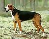 Нагонка гончих охотничьих собак на охоте
