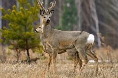 Увеличилось количество путевок на охоту  в Новосибирской области