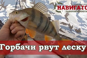 """Крупный морской окунь на мормышку. Новая рубрика """"На рыбалку с Навигатором"""""""