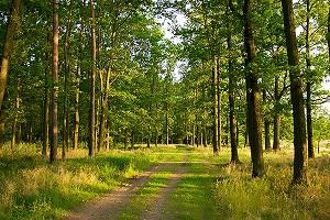 В Волгоградской области подсчитывают охотничьи ресурсы