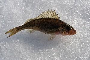 Календарь рыболова на февраль 2018