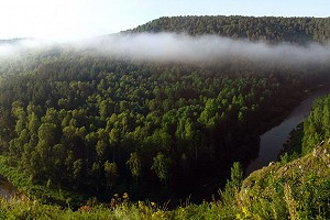 День леса - праздник мирового значения