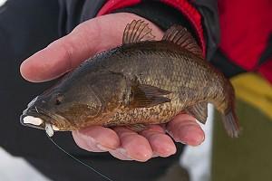 Азартное открытие первого льда - рыбалка на ротана!