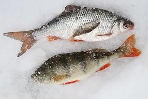 Календарь рыболова на январь 2019