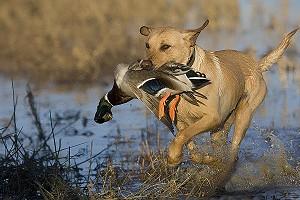 Новые поправки в закон «Об охоте»