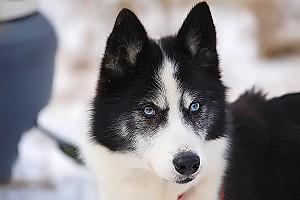 Собак для охоты использовали еще в эпоху неолита