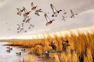 Охотников НСО будут привлекать к обсуждению вопросов открытия и проведения охоты