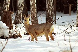 В Кемеровской области  серьезно подошли к зимней подкормке  животных и птиц