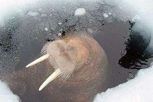Чтобы лунка не замерзала, что делать? Три самых эффективных способа