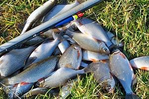 Календарь рыболова на апрель 2020
